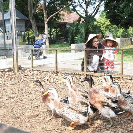 Kuntum Farm - 6 Kegiatan Sundate Bersama Keluarga