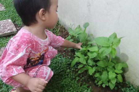 Alasan Mengapa Saya Mengajari Anak Berkebun