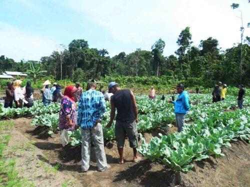 Pegunungan Arfak - Gara-gara Suami Sering Dinas ke Papua